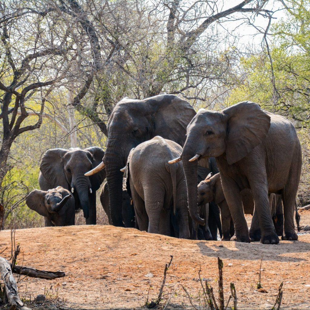 Elephants in Majete National Park
