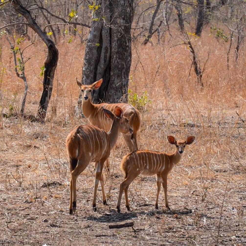On safari in Malawi