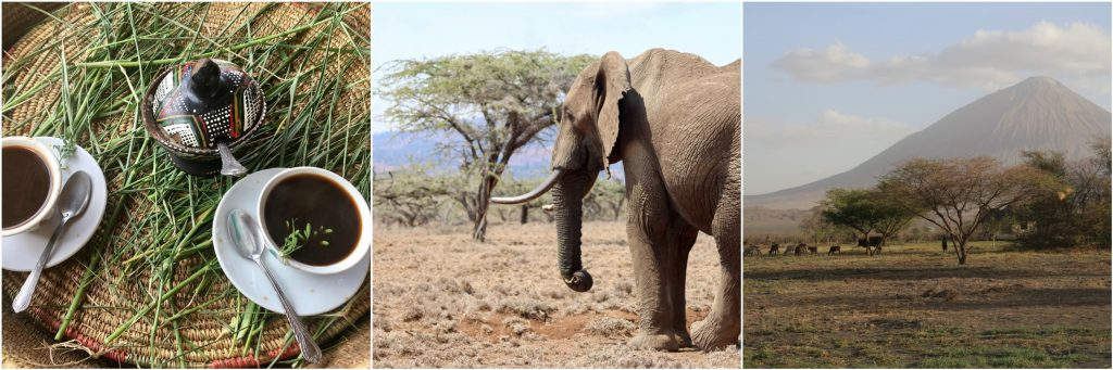 African elephants, coffee and mountains