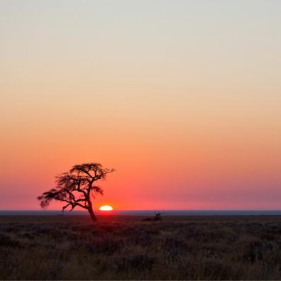 Savannah sunset Mozambique