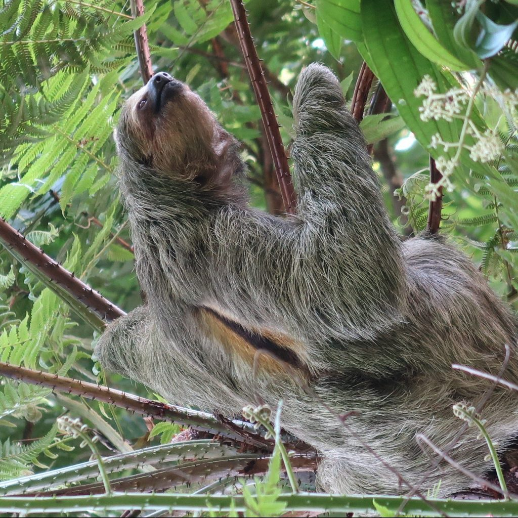 Searching for sloths in Costa Rica on a Faraway honeymoon